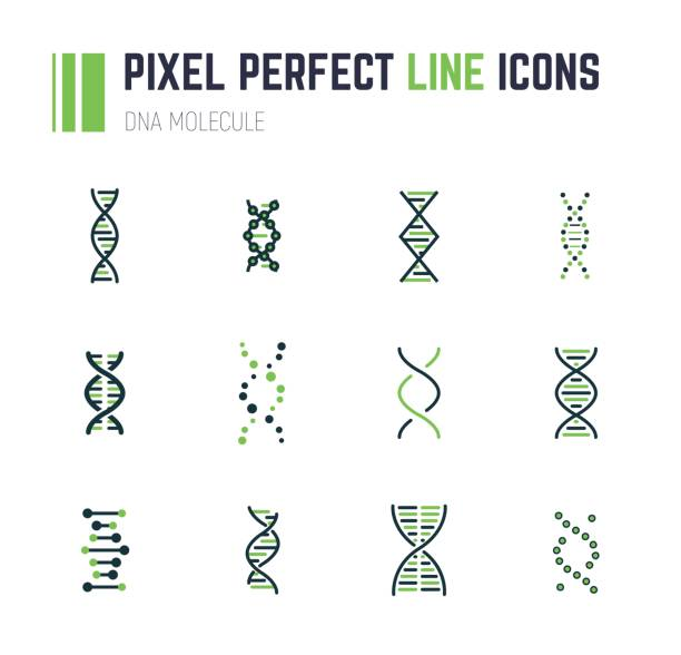 DNA molecule icon set Set of 12 line style DNA molecule icons. Double helix molecule. Linear flat vector illustration. Biotech icons, medecine or science icon. Genetics sign. helix model stock illustrations