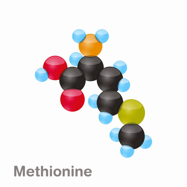 Molecule of Methionine, Met, an amino acid used in the biosynthesis of proteins Molecule of Methionine, Met, an amino acid used in the biosynthesis of proteins, Vector amino acid stock illustrations