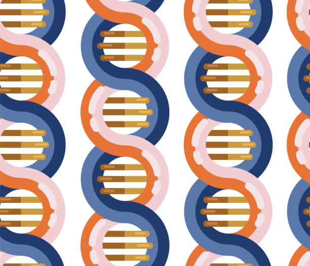 dna分子無縫載體背景。重複模式螺旋遺傳dna鏈醫療圖示。螺旋結構符號。dna 鏈 放大雙螺旋結構 藍色和紅色 - medical technology 幅插畫檔、美工圖案、卡通及圖標