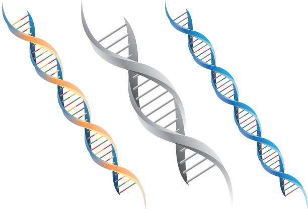 dna molecule - dna 幅插畫檔、美工圖案、卡通及圖標