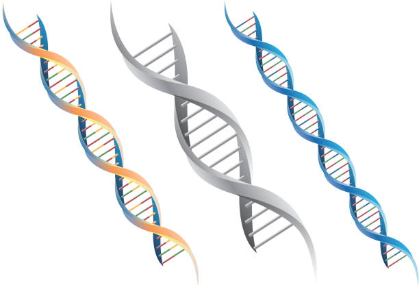 dna-molekül - dna stock-grafiken, -clipart, -cartoons und -symbole