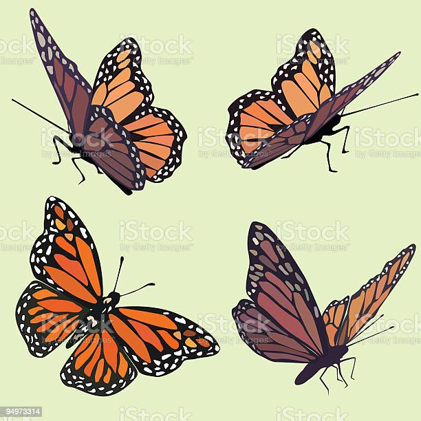 Monarch butterflies in four different poses on pastel green vector id94973314?b=1&k=6&m=94973314&s=612x612&h=akos0fz6u7dhypnx0ku41i0da qowdh 8d4ofmy qc0=