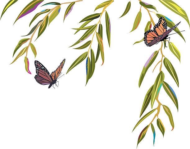 illustrazioni stock, clip art, cartoni animati e icone di tendenza di farfalle monarca atterra in rami di un albero di salice - farfalla ramo