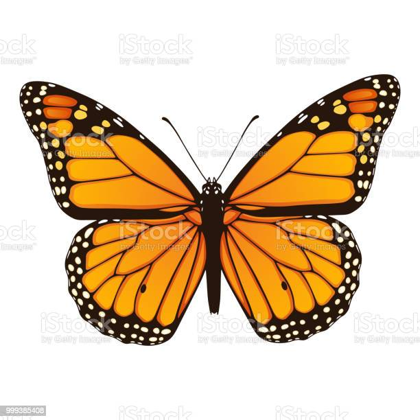 Monarch butterfly hand drawn vector illustration vector id999385408?b=1&k=6&m=999385408&s=612x612&h=v0vh0693jgb8hwyj4y62xycbenu7bpsb6xkb4ep8yzk=