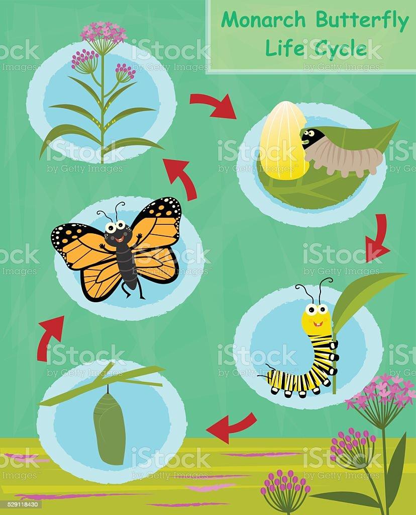 Ilustración de Mariposa Monarca Ciclo De Vida y más banco de ...