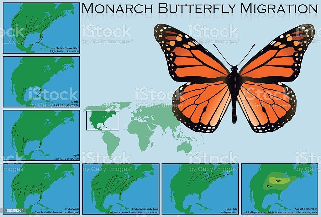Monarch Butterfly Migration vector art illustration