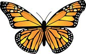 Beautiful orange, yellow, and black vector Monarch Butterfly -