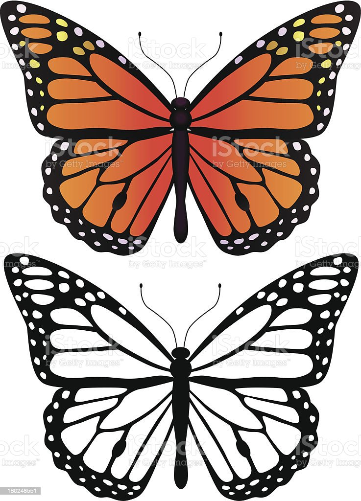 Monarch Butterfly Stock Illustration - Download Image Now ...
