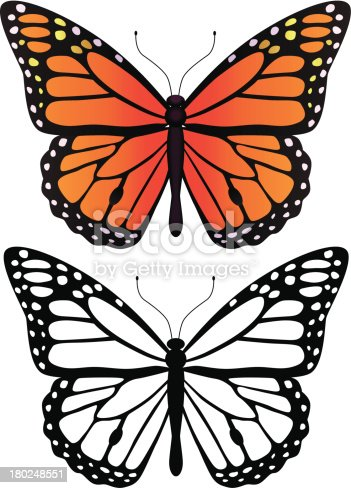 A vector monarch butterfly in black and white and in color.