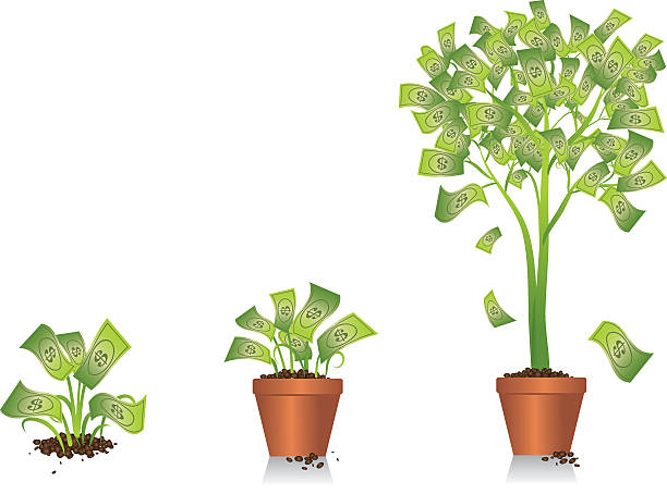 Money Tree Illustration of a small plant developing into a money tree. money tree stock illustrations