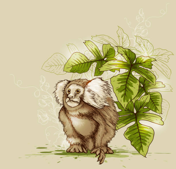 Monkey and green tropical plant Tropical background with monkey and green plant. EPS 10 file, contains transparencies. marmoset stock illustrations