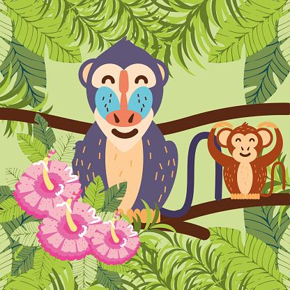monkey baboon tropical