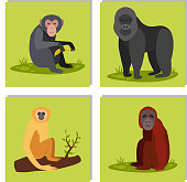Monkey character animal different breads wild zoo ape chimpanzee vector illustration. Macaque nature primate cartoon wild zoo cheerful gorilla ape chimpanzee wildlife jungle animal.