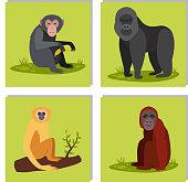 Monkey character animal different breads wild zoo ape chimpanzee vector illustration