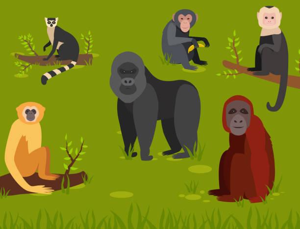 猿キャラ動物の異なるパン野生動物園サル チンパンジー ベクトル イラスト - 猿点のイラスト素材/クリップアート素材/マンガ素材/アイコン素材