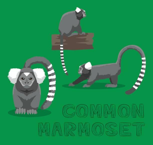 Monkey Common Marmoset Cartoon Vector Illustration Animal Cartoon EPS10 File Format common marmoset stock illustrations