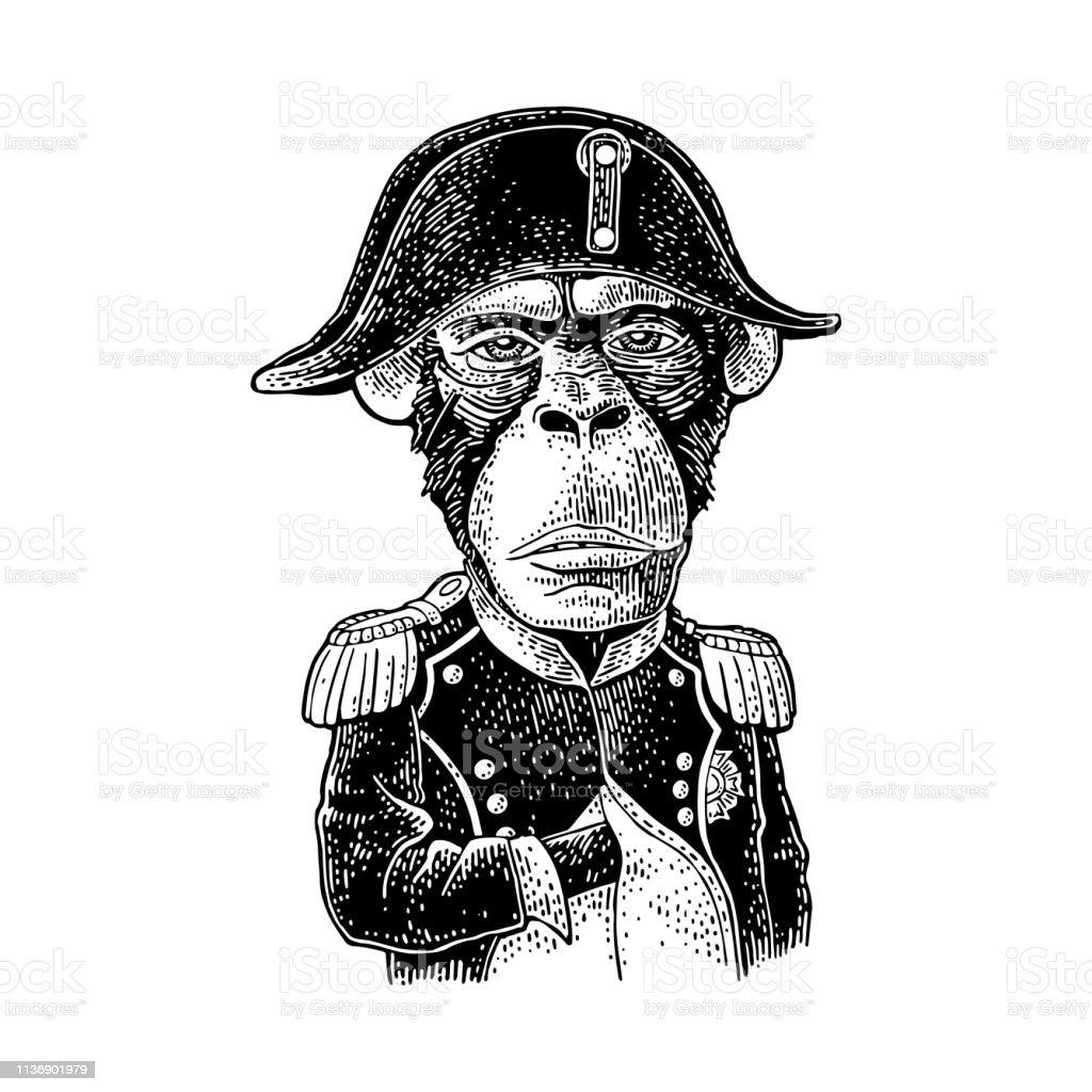 c37239c5 Monkey dressed in the french military uniform and cap. Vintage black engraving  royalty-free
