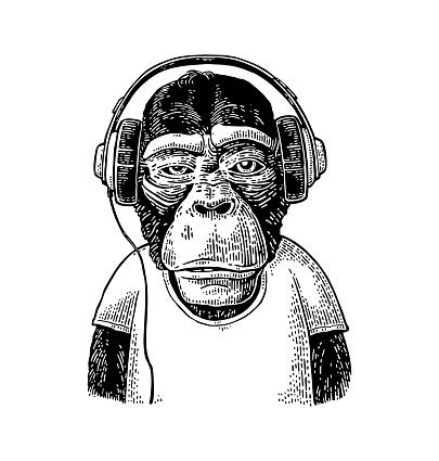 Monkey dressed t-shirt hear headphones. Vintage black engraving