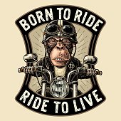 Monkey driving a motorcycle rides. Vector vintage engraving