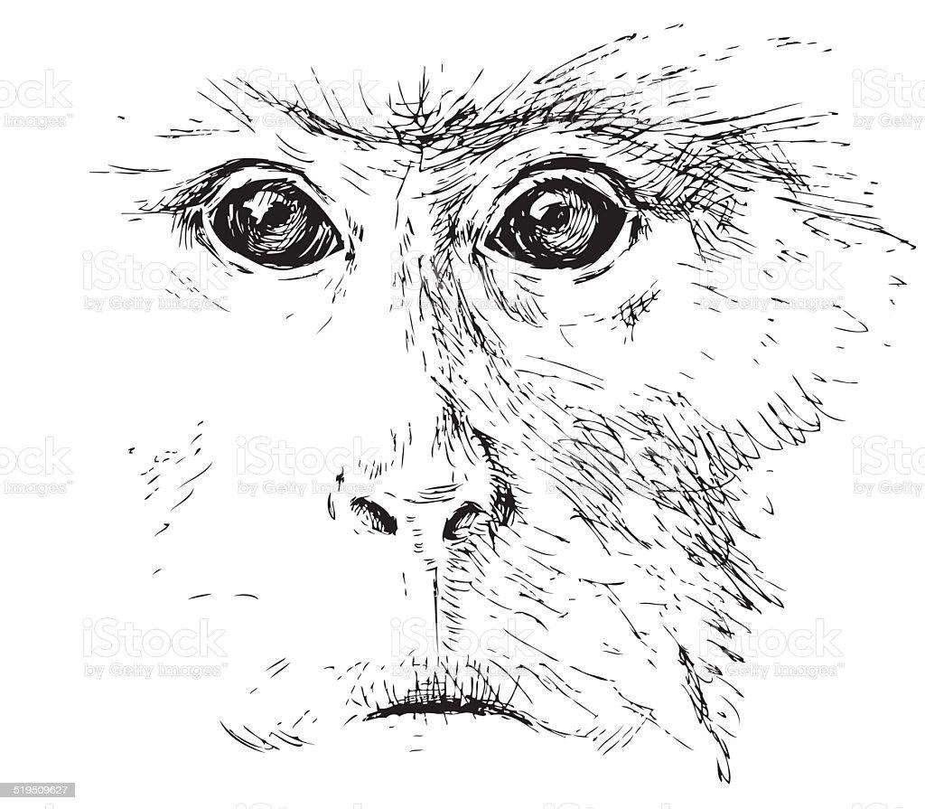 monkey face vector art illustration