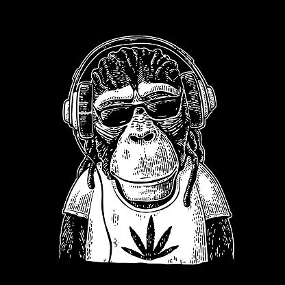 Monkey hipster with dreadlocks in headphones, sunglasses and t-shirt