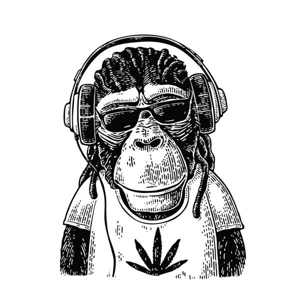 Monkey hipster with dreadlocks in headphones, sunglasses and t-shirt Monkey hipster with dreadlocks in headphones, sunglasses and t-shirt with marijuana leaf. Vintage black engraving illustration for poster. Isolated on white background rastafarian stock illustrations