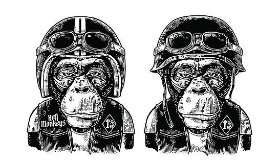 Monkey in the motorcycle helmet and glasses. Vintage black engraving