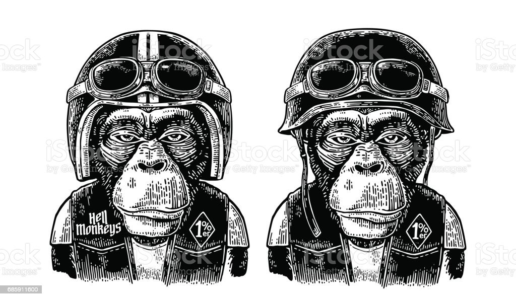 Monkey in the motorcycle helmet and glasses. Vintage black engraving - ilustración de arte vectorial