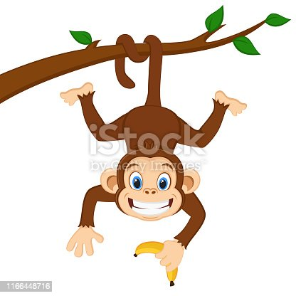 Monkey is hanging on a branch and holding a banana on a white background.