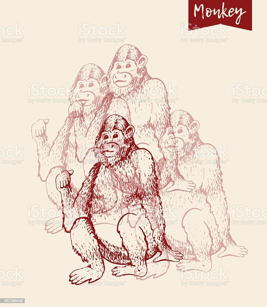 monkey sketch engraving vector art illustration