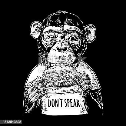 Monkey wearing a t-shirt eating a hamburger burger. Vintage black engraving