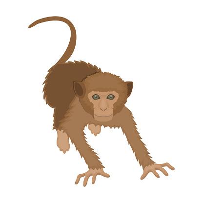 원숭이 정글의 야생 동물입니다 원숭이 만화 스타일 벡터 기호 재고 일러스트 웹에서 포유동물 영장류 단일 아이콘 0명에 대한 스톡 벡터 아트 및 기타 이미지