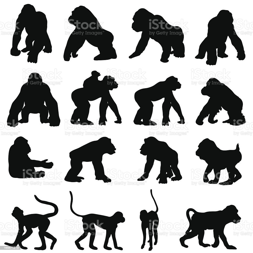 Monkeys and other primates in silhouette Monkey and primate silhouettes in different positions include gorillas, chimps, spider monkeys an orang-utan a mandril and a baboon. Animal stock vector