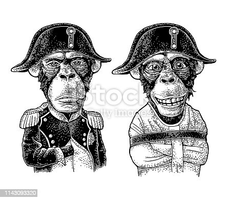 Monkeys dressed in the straitjacket and in the french military uniform and Napoleon cap. Vintage black engraving illustration. Isolated on white background. Hand drawn design element for t-shirt