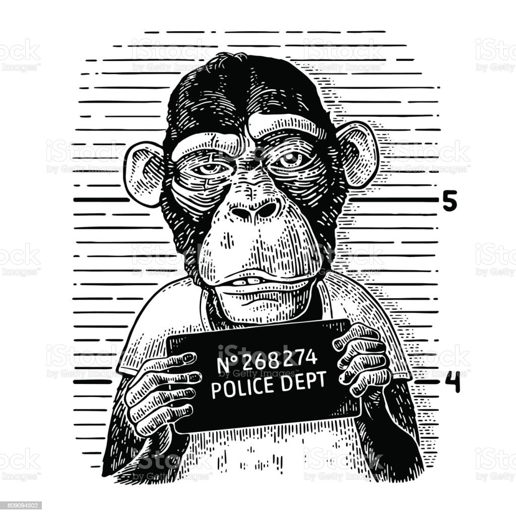 Monkeys in a T-shirt holding a police department banner vector art illustration