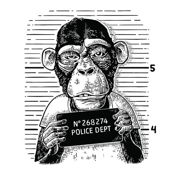 Monkeys in a T-shirt holding a police department banner Monkeys in a T-shirt holding a police department table. Vintage black engraving illustration for poster. mug shot stock illustrations