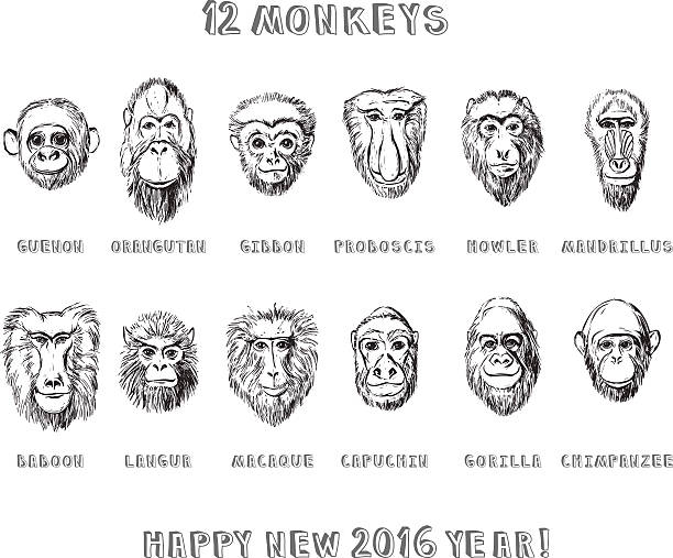 Monkeys set Collection of hand drawn monkeys in sketchy style langur stock illustrations