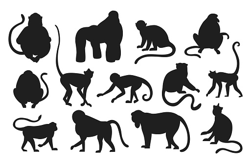 Monkeys silhouette. Hanging and jumping black apes. Various types of primates. Exotic animals set. Exotic rainforest fauna. Contour mammals with tails. Vector templates for zoo logo