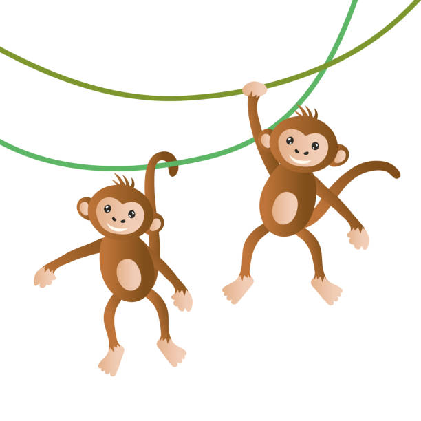 monkeys vector illustration - monkey stock illustrations