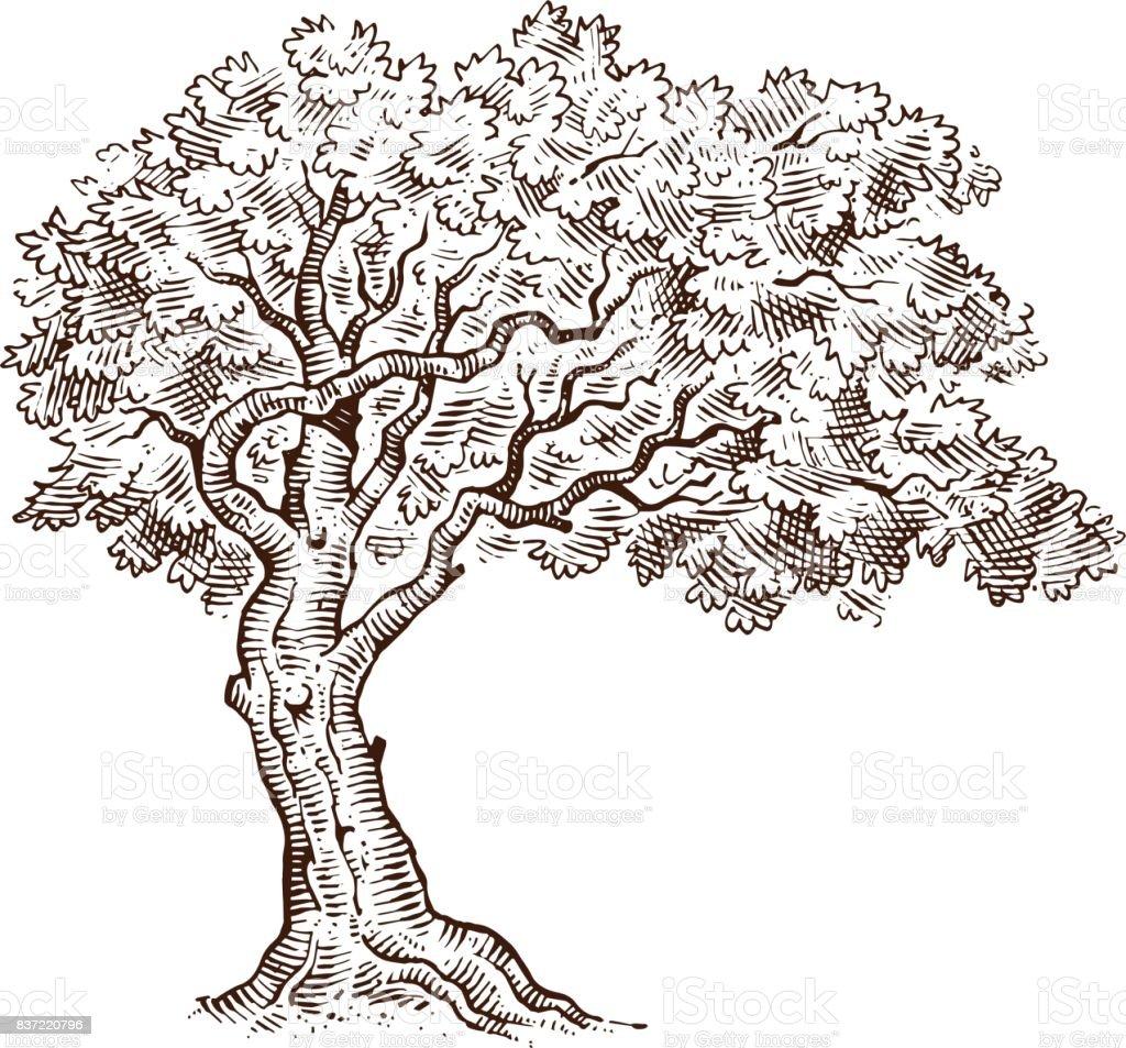 Croquis dessin arbre mono vecteurs libres de droits et - Croquis arbre ...