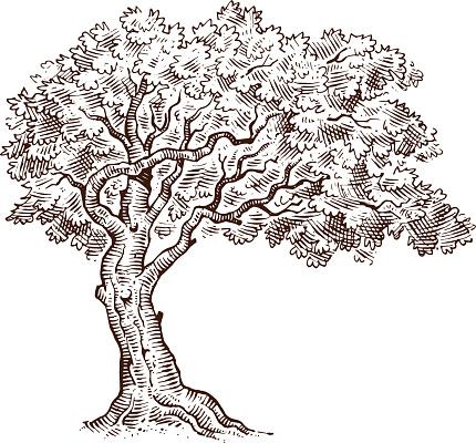Mono tree drawing sketch