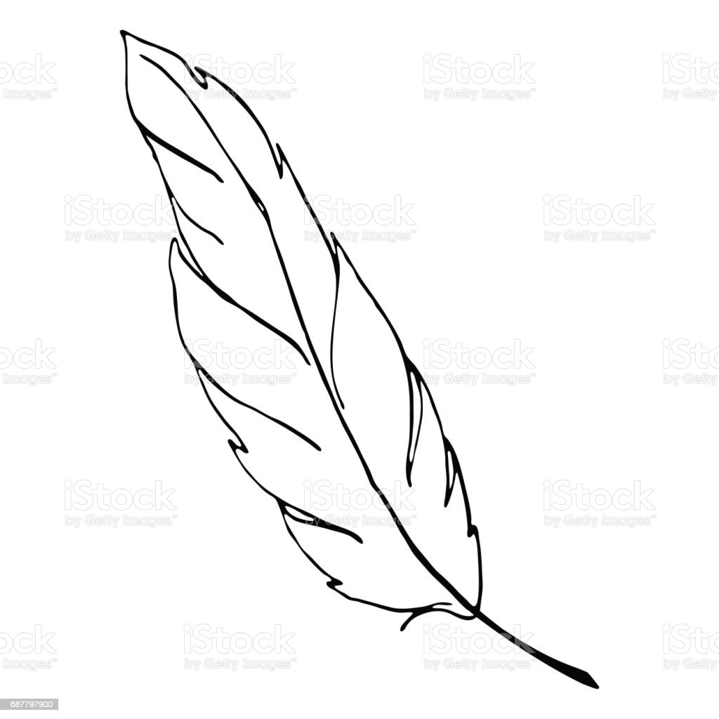 Monochrome Black And White Bird Feather Line Art Vector Stock Vector ...