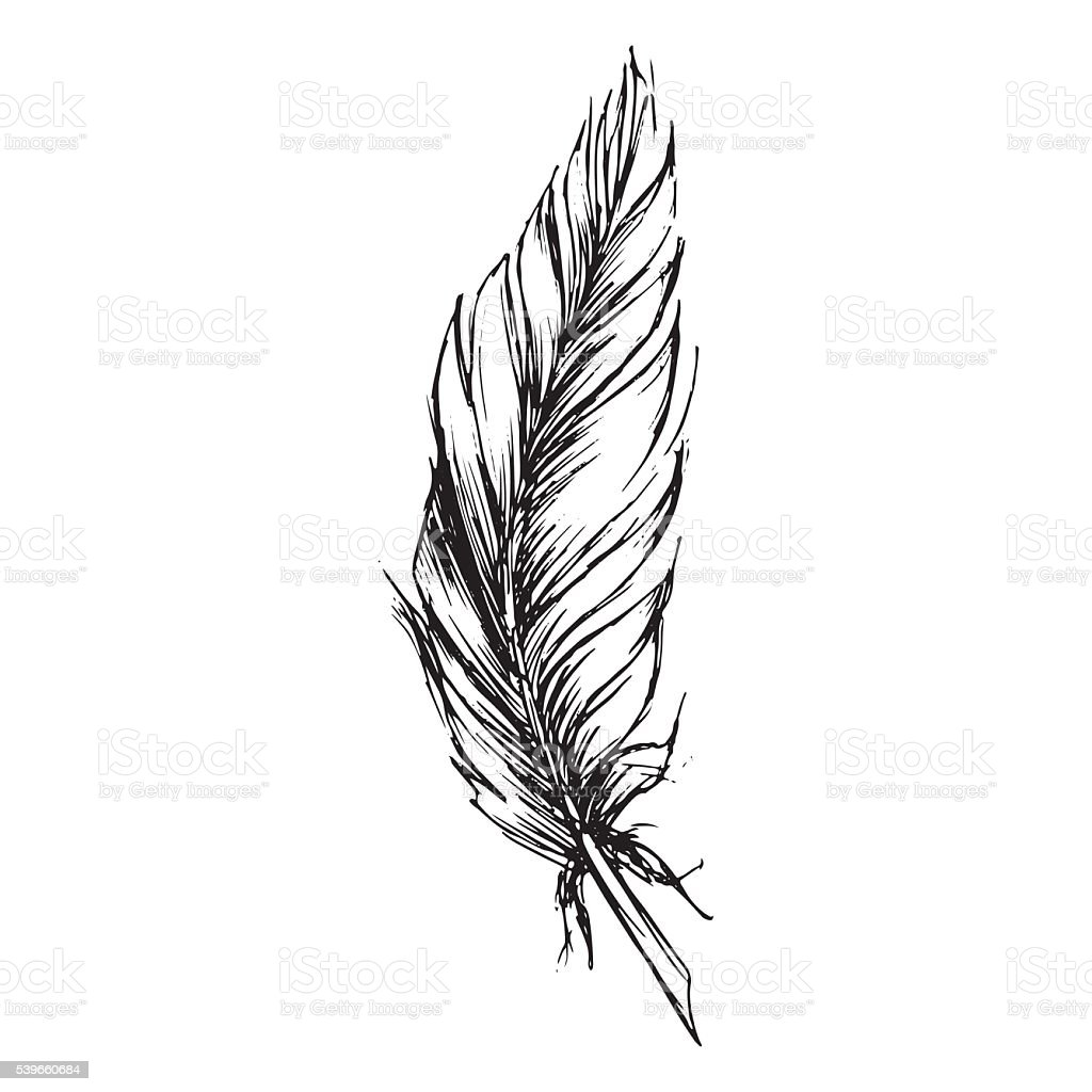 Monochrome black and white bird feather vector sketched art vector art illustration
