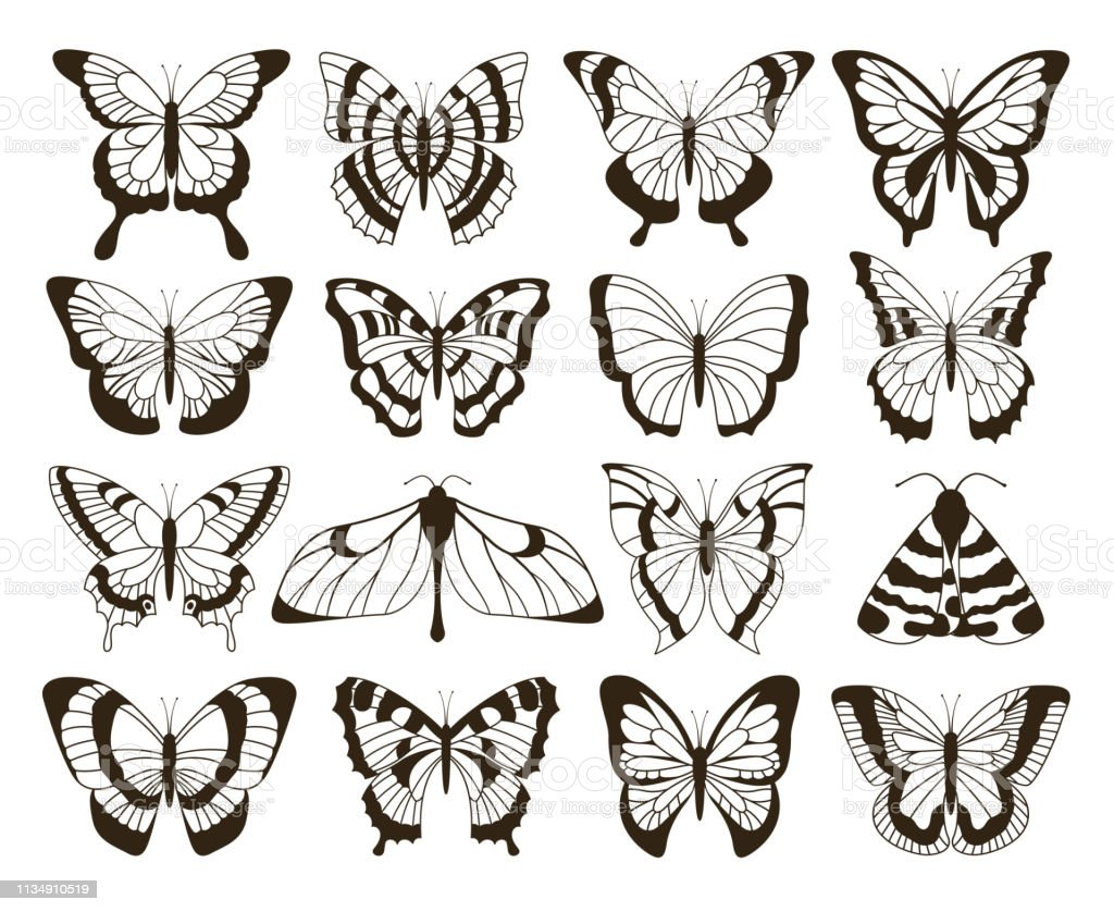 Monochrome butterflies black and white drawing hand drawn