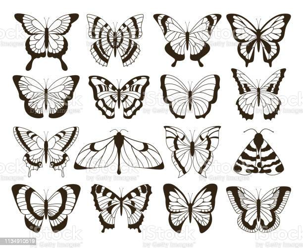 Monochrome butterflies black and white drawing hand drawn tattoo vector id1134910519?b=1&k=6&m=1134910519&s=612x612&h=nz5kolxltmwdqhypzaswk9t9jtljwcwzrvae0ohlcoe=