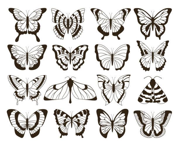 illustrations, cliparts, dessins animés et icônes de papillons monochrome. dessin noir et blanc, à la main dessiné tatouage formes collection vintage. papillon de vecteur d'isolement - tatouages ailes