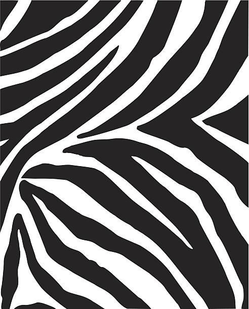 ilustrações de stock, clip art, desenhos animados e ícones de vector zebra pele - padrões zebra