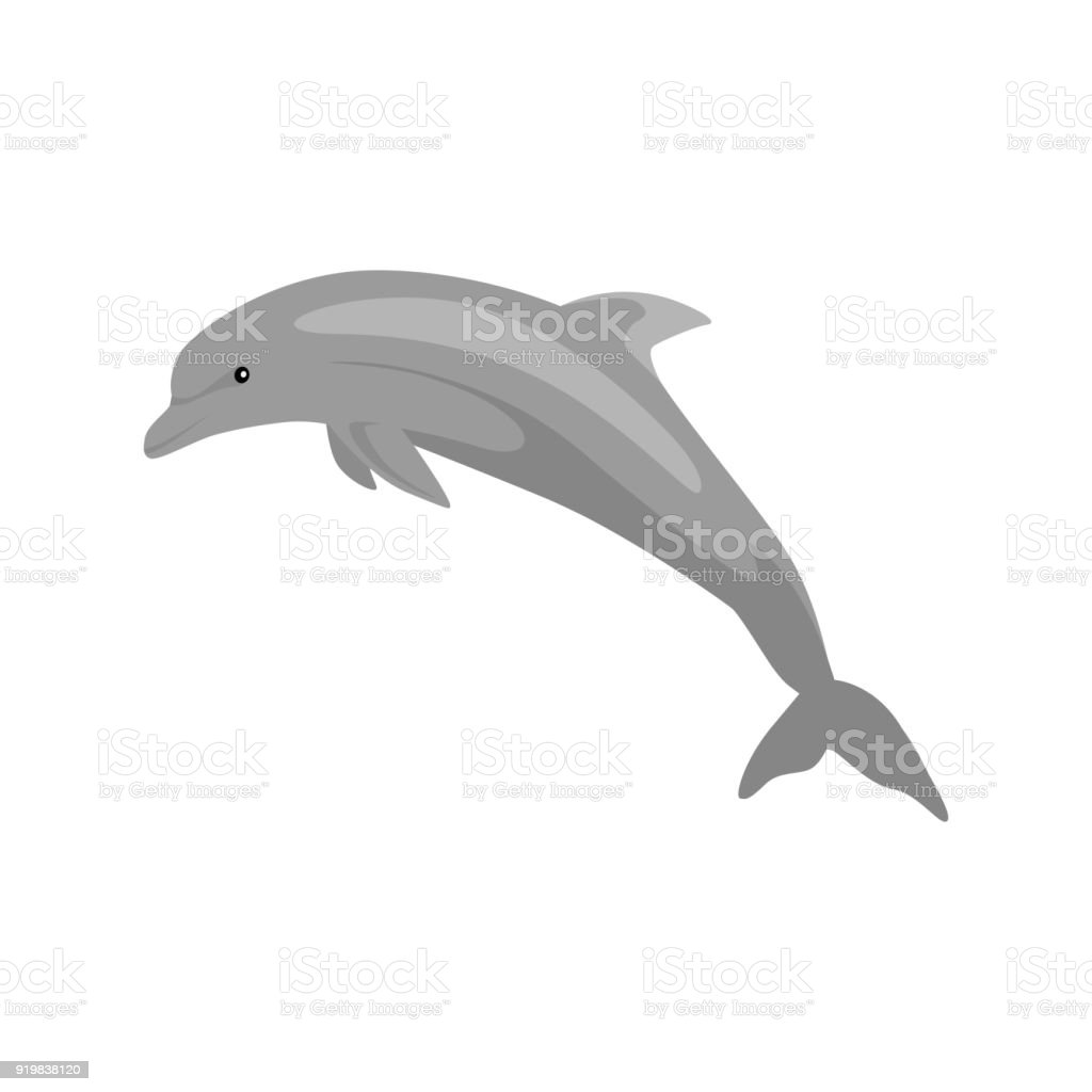 Monochrome Dolphin Isolated on White Background