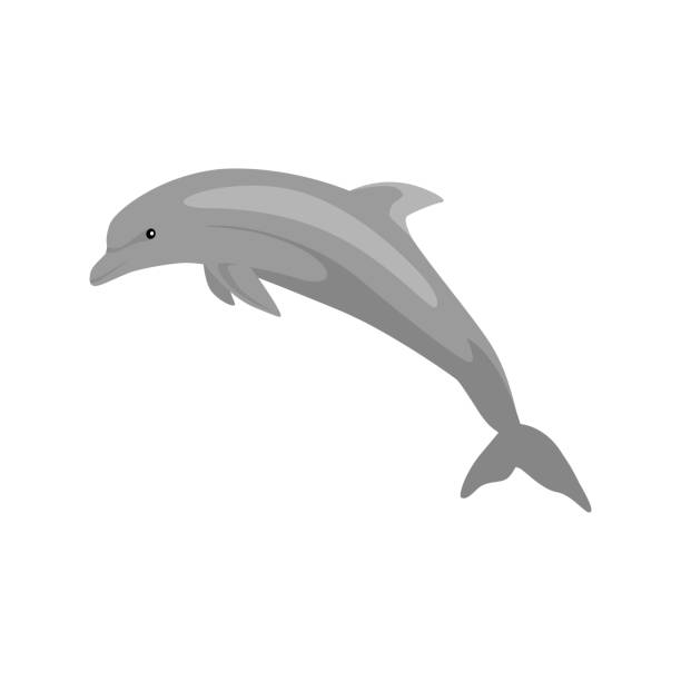monochrome dolphin isolated on white background - dolphin stock illustrations