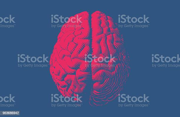 Monochrome drawing brain vintage style vector id953686942?b=1&k=6&m=953686942&s=612x612&h=1nrmxb2 r2xbuwcnygd k63l4dvwch ihugn4dcfhpe=
